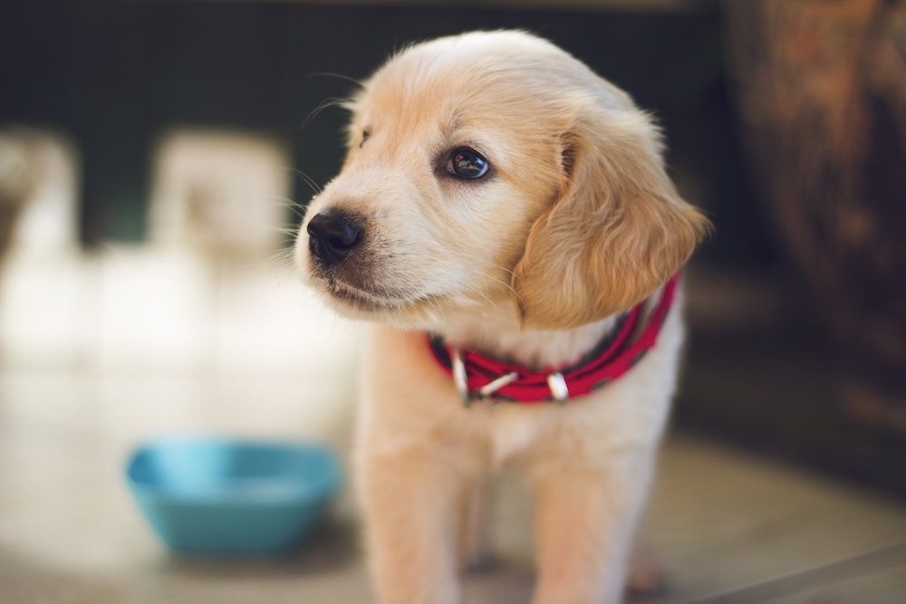 pet health insurance Puyallup WA