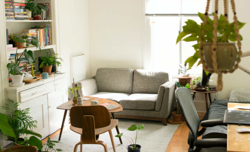 couch in apartment with plants