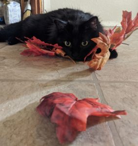 cat laying on ground with leaves
