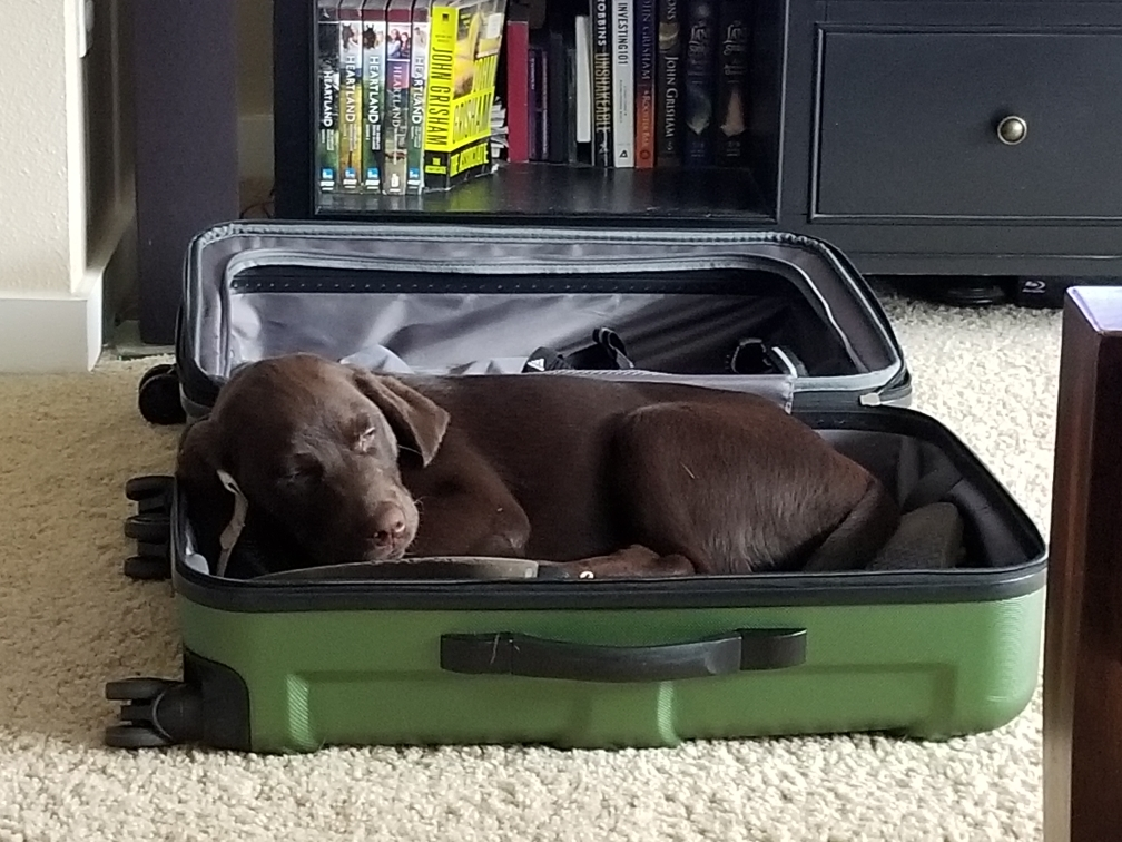 dog laying in suitcase