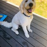 dog named Blue from PNW Insurance Group
