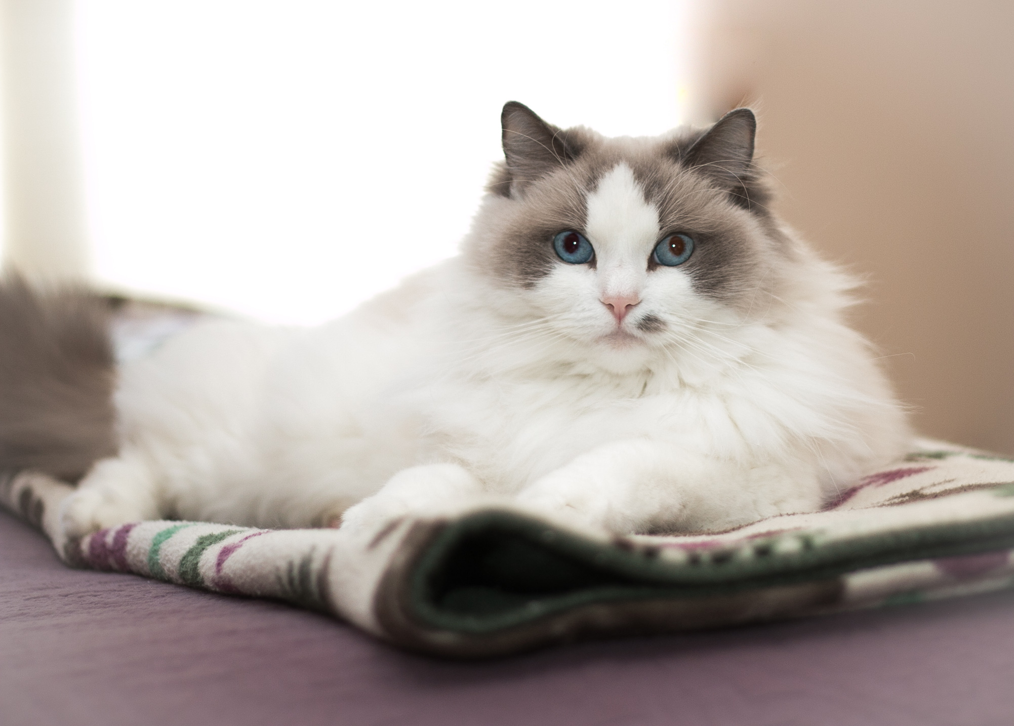 cat named Smudge from PNW Insurance Group