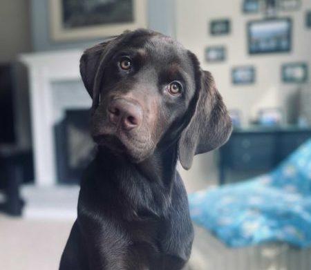 Dog named Larry from PNW Insurance
