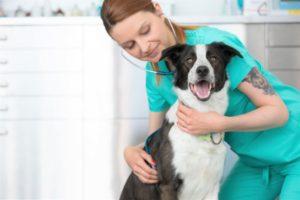 veterinarian insurance Puyallup WA