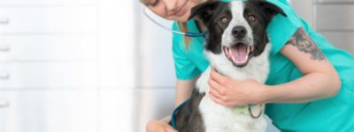 veterinarian insurance puyallup washington