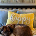 Tucker - PNW Insurance Pets of PNW